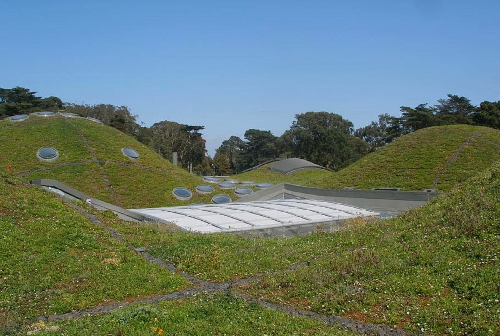 Green roof buildings