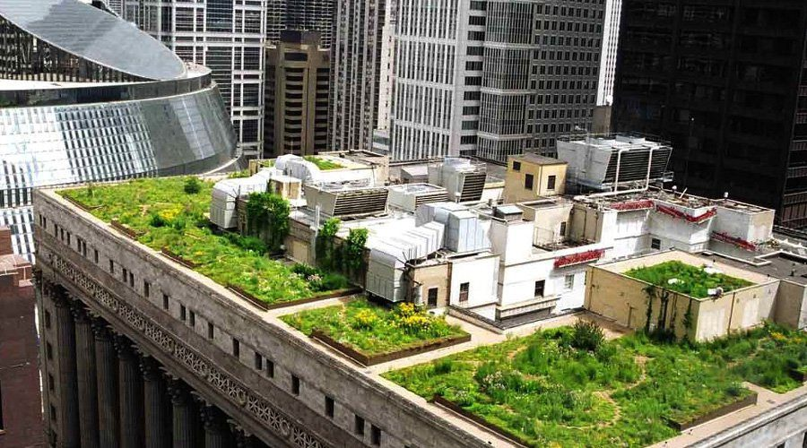 The Chicago City Hall green roof