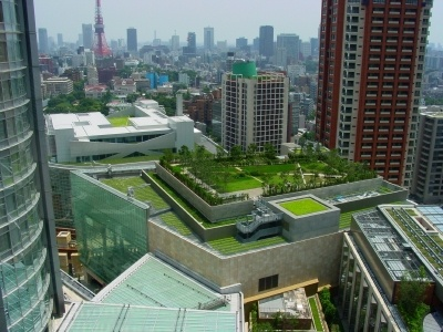 Green roof buildings in downtown Toronto